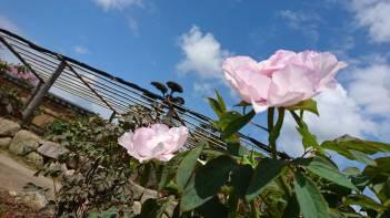 お花の季節がやってきました!